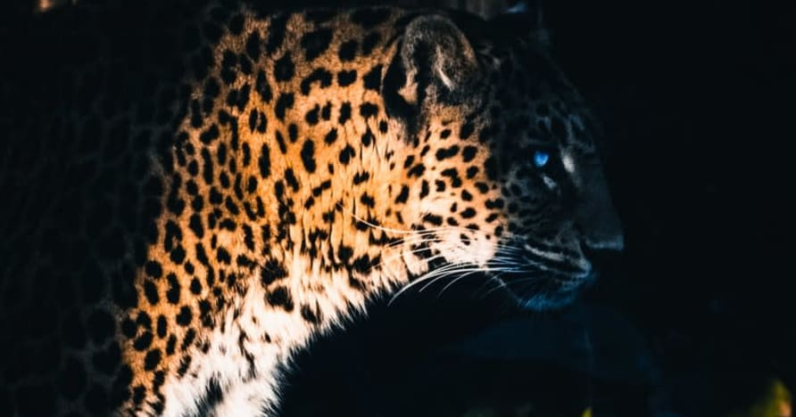 Yggdrasil Partners ReelPlay để giải phóng Jaguar SuperWays khỏi Bad Dingo
